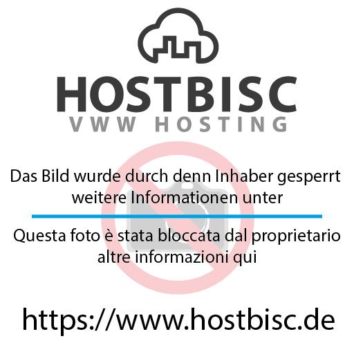 bush_PNG72208a712.png